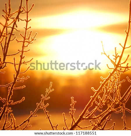frost on tree at the lake shore at the sunrise. Silhouette - stock photo