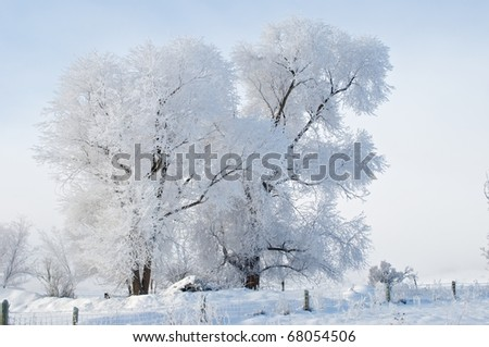 Frost on tree in winter - stock photo