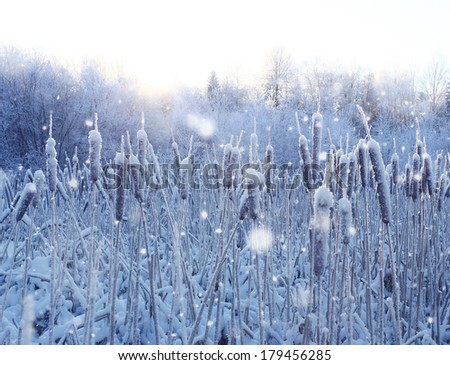 frost, winter, snow on the old grass - stock photo