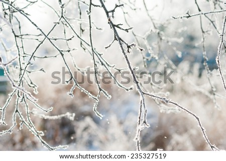 Frosted bare tree branch in winter background  - stock photo