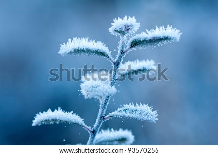 frosted brunch in winter time - stock photo