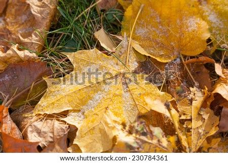 Frosted fallen leaves on the grass - stock photo