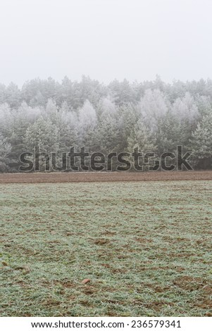 frosted landscape. field and forest at winter