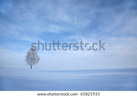 Frosted lonely birch in winter under blue sky - stock photo