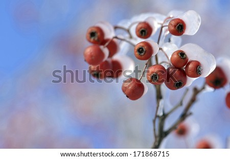 frosted red fruits  - stock photo