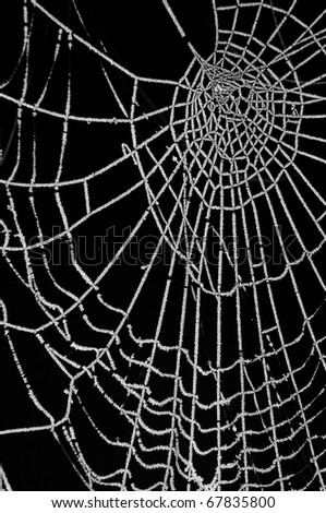 Frosted spider web isolated on black background - stock photo