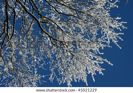 frosted tree at winter, covered snow - stock photo