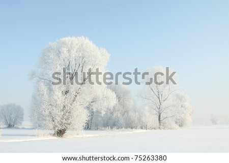 Frosted trees against a blue sky on a sunny morning. - stock photo
