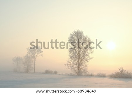 Frosted trees in the field on a foggy winter morning. - stock photo