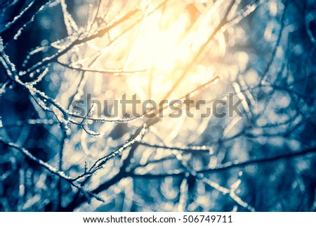 Frosty Branch with Snow in Winter. Sunny Day Abstract Background. Shallow Depth of Field. Focus on Front Branch. Toned Photo with Bokeh.