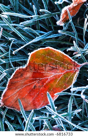 Frosty fallen tree leaf lying on frozen grass on a cold fall morning - stock photo