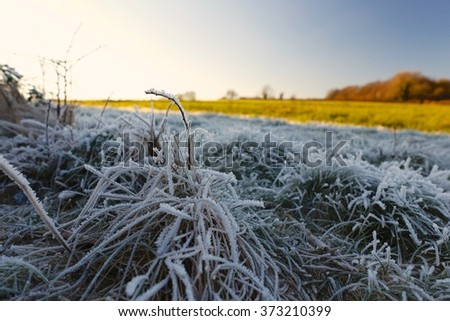Frosty grass vegetation in Cotswolds countryside on cold Sunny Winters day. Beautiful natural ice, frost formation in the shade, green distant field, trees in the sun & blue sky - stock photo