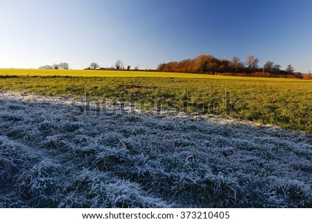 Frosty grass vegetation in Cotswolds countryside on cold Sunny Winters day. Beautiful natural ice, frost formation in the shade, vibrant green distant field, trees in the sun & blue sky - stock photo
