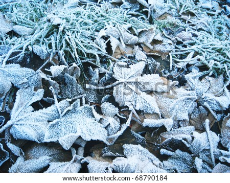 Frosty leaves, England. - stock photo