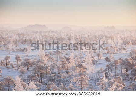 Frosty morning at forest. Landscape with the frozen plants, trees and water. Kemeri National park in Latvia