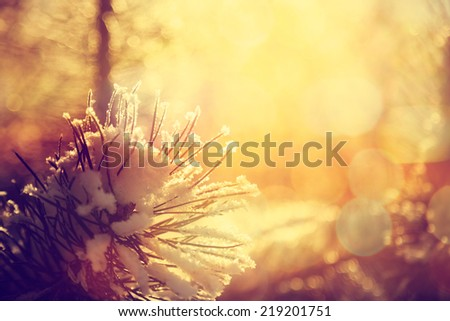 Frosty Spruce Branch with Snow in Winter. Shallow Depth of Field. Toned Photo with Bokeh. - stock photo
