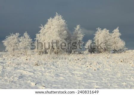 Frosty trees in winter in snowy field - stock photo