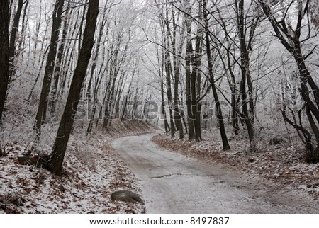 Frosty winter forest with a path through it