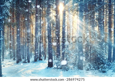 frosty winter landscape in snowy forest - stock photo