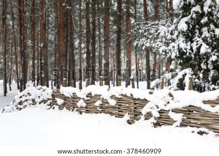 frosty winter landscape in snowy forest, wood wrapped with snow, Christmas in the woods after snowstorm, - stock photo
