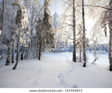 frosty winter morning in a wood plastered with rime - stock photo