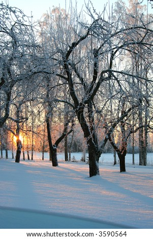 Frosty winter sunrise, the sun appear through trees.