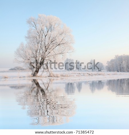 Frosty winter tree against a blue sky with reflection in water. - stock photo