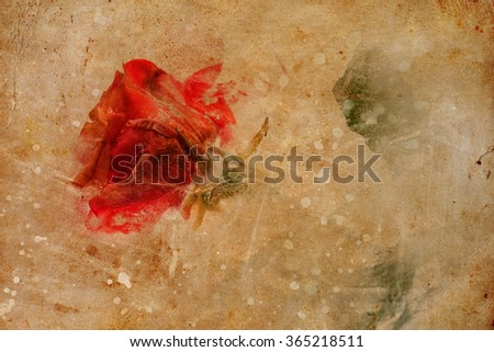 Frozen beautiful red rose flower on paper background