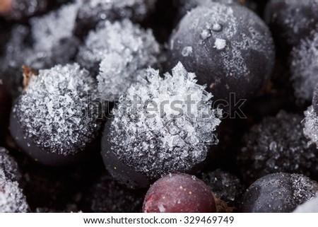 Frozen blackcurrant background, covered with ice and snow