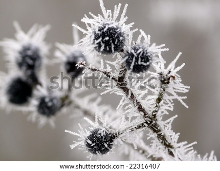 frozen Blueberries - stock photo