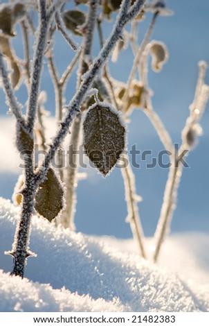 Frozen branch - stock photo