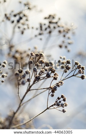 Frozen branch on very cold and sunny day in winter - stock photo