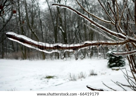 Frozen Branch with Snow and Woods - stock photo