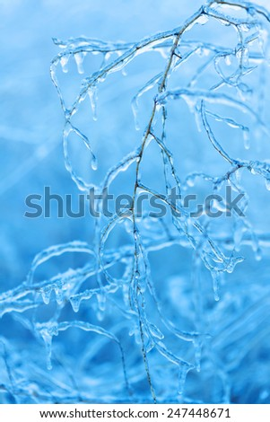 Frozen branches covered with flowing icicles in winter - stock photo