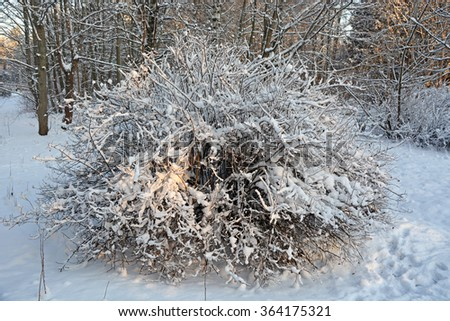 Frozen bush closeup - stock photo
