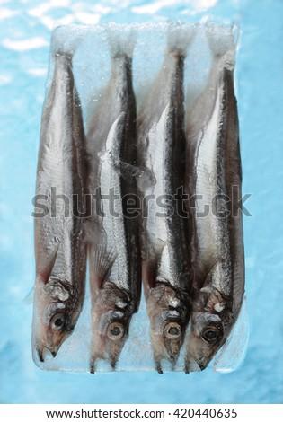 Frozen capelin fishes - stock photo