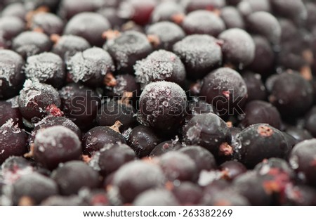 Frozen currant blueberries ���lose up - stock photo