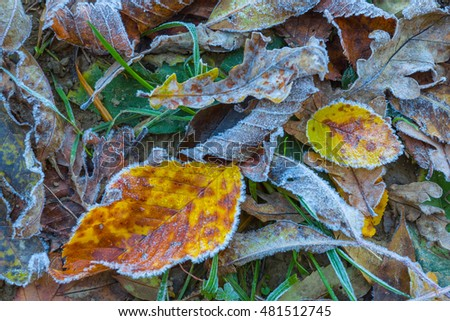 frozen dry autumn leaves background