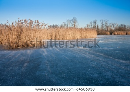 Frozen Dutch wetland with golden reed - stock photo