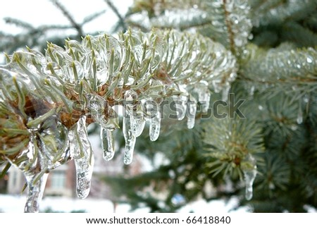 Frozen Evergreen Tree Needles - stock photo