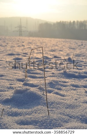 frozen field, winter, winter landscape, the sun's rays, snowy landscape, ice, frozen vegetable, snow, winter beauty,footprints in the snow, snowflake, sun power, suffer, - stock photo