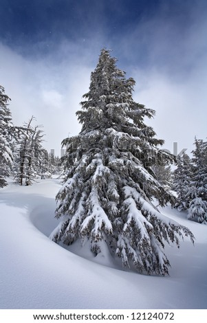 Frozen fir tree in a snow field on Tumalo Mountain Oregon. - stock photo