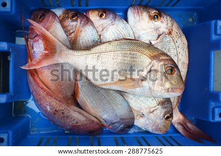 Frozen fish on display in Middle eastern food market in Akko Acre Israel. Food background texture. - stock photo