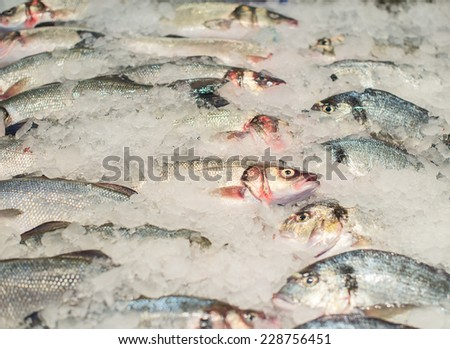 Frozen fish on the market. - stock photo