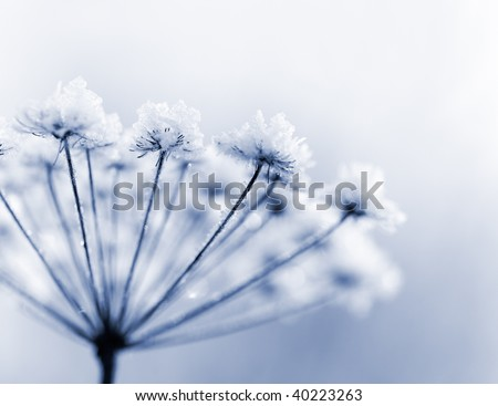 Frozen flower in blue tone, very shallow focus - stock photo