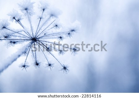 Frozen flower in light blue color - stock photo