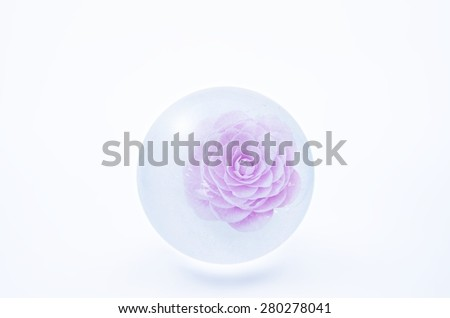 Frozen flower of camellia in the ice globe. - stock photo