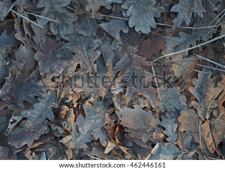 Frozen Foliage fall background. Oak's leaves pattern.