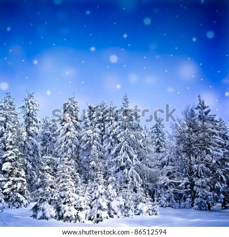 frozen forest - stock photo