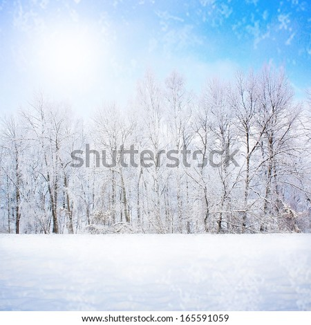 Frozen forest in snow - stock photo